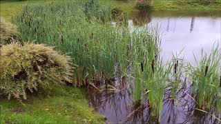 как разводить рыбу. Организация водоема для разведения рыбы. Охрана и уход за озером