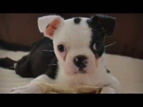 Dog Born With 'Swimmer Puppy Syndrome' Miraculously Learns to Walk | HPL