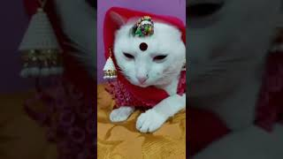 Tik Tok Cat Funny video compilation  Tiktok Fan Club
