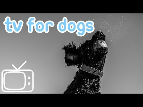 Videos for Dogs! Deep Chillout Abstract Movies & TV for Dogs to Watch!