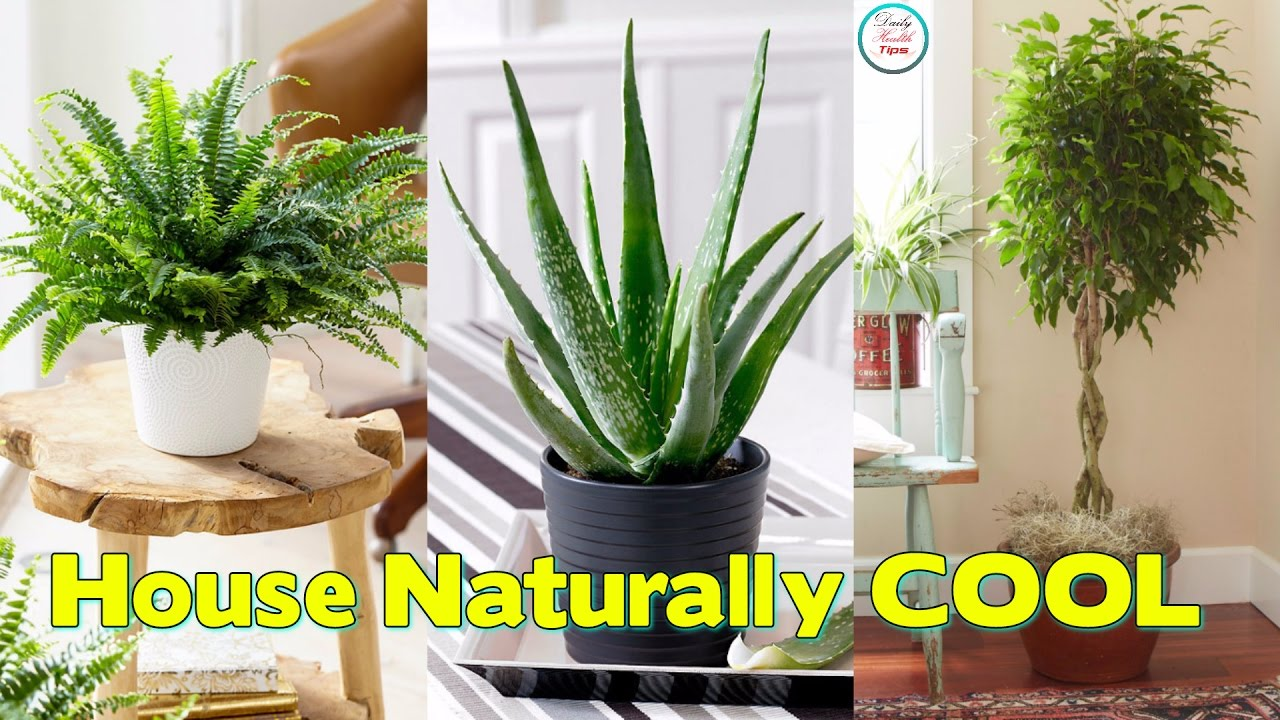 Plants To Keep Your House Naturally Cool