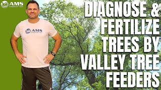 How to Fertilize Trees in the Phoenix Area