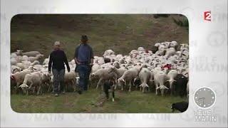 Actu plus - La fête du mouton