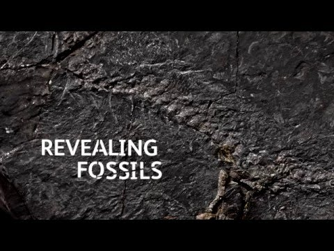 Fossil Hunters: Revealing fossils
