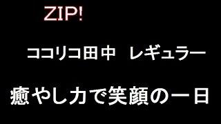 ZIP!レギュラー! お笑いコンビココリコの田中直樹レギュラーに!お...