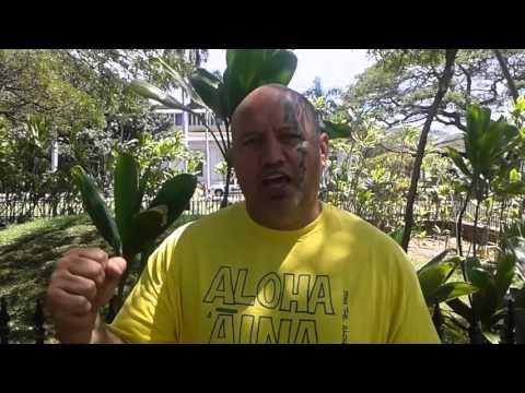 Kaleikoa Ka'eo - Voices of  ʻAha Aloha ʻĀina