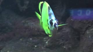 Chicago Trip 2013 Day 4 - Shedd Aquarium: Very Colorful