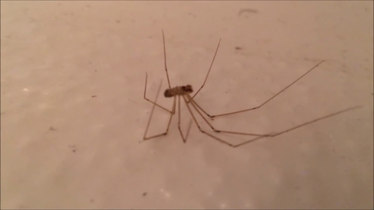Brown Recluse Spider Bite Picture Image on