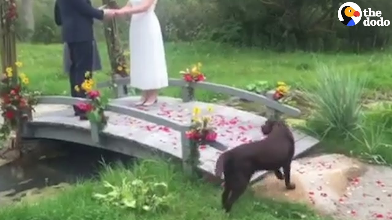 Dog Crashes Wedding And Decides To Stay The Dodo YouTube - After a stray dog crashed their wedding this couple had the best reaction ever