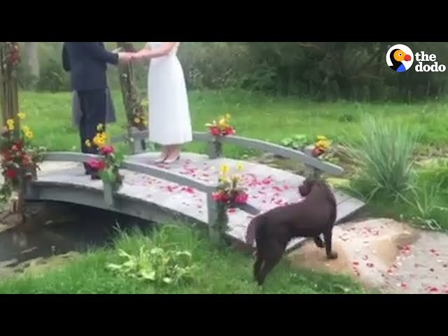 Dog Crashes Wedding and Decides To Stay | The Dodo