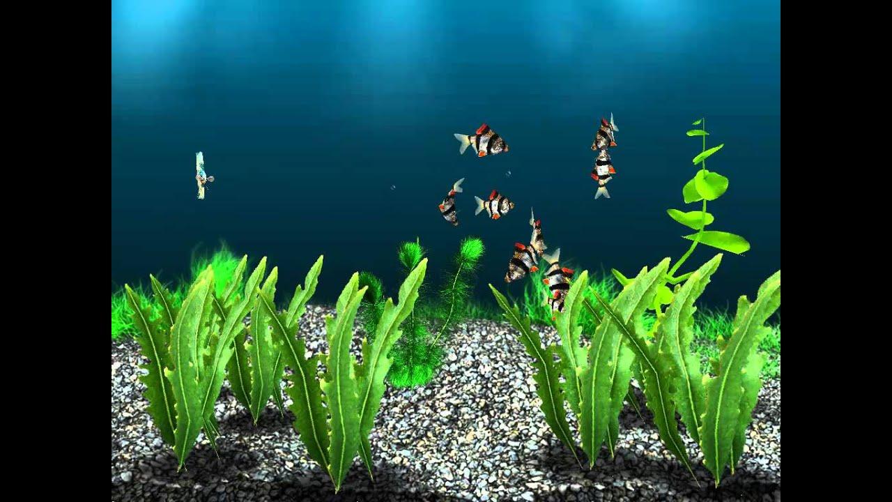 Aquarium fish tank game - Aquarium Fish Tank Game