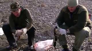 видео Вип-туры по Камчатке