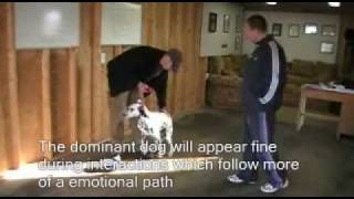 Dog Training - Food Aggression