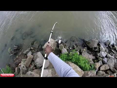 Rod And Reel Catfish Combos Under 60$ For Starters