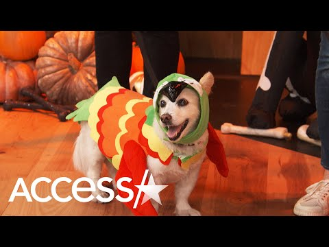 Kramer In The Morning - You Guys! Howl-Oween Costumes for Puppers