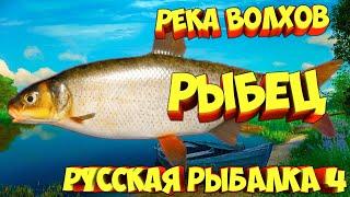 русская рыбалка 4 Рыбец река Волхов рр4 фарм Алексей Майоров russian fishing 4