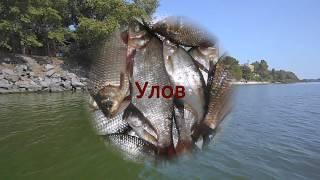 Рыбалка на Днепре в Кременчуге 2019