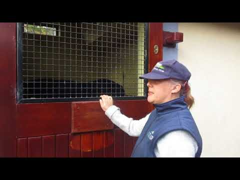 The Irish National Stud, Tuesday 10-October-2017, video 7
