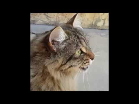 Cats Chirping And Chattering! --- CAT COMPILATION