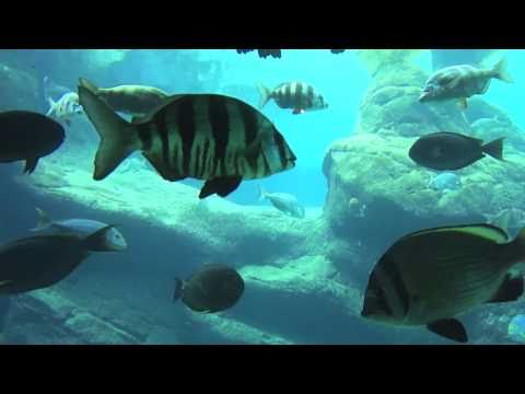 uShaka aquarium Durban visit - Oct 14, 2010: Line, Jonatan, Simon