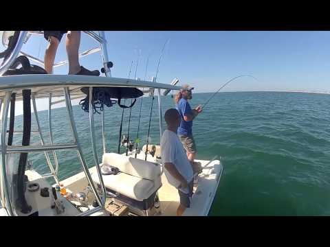 Cobia Fishing In The Outer Banks, NC