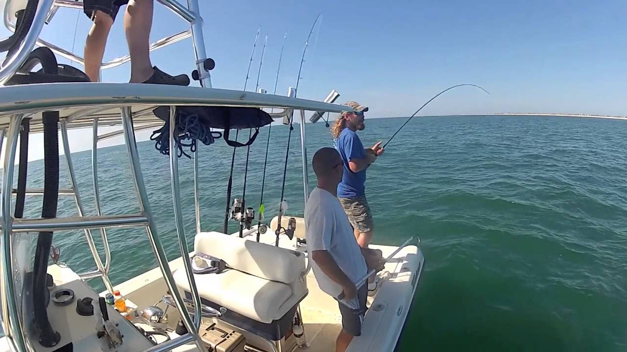 Cobia fishing in the outer banks nc youtube for Fishing outer banks nc