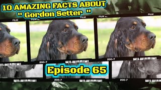 Top 10 fun facts about Gordon Setter.
