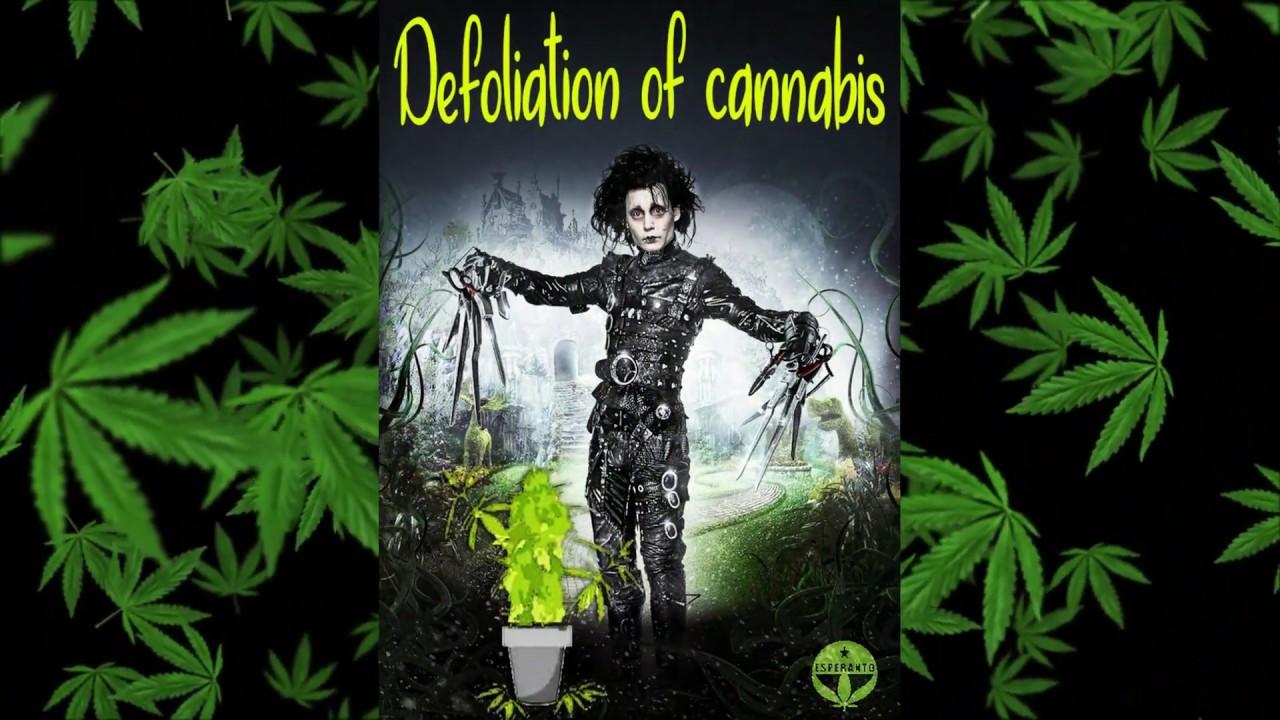 Марихуана астрал марихуана юмор