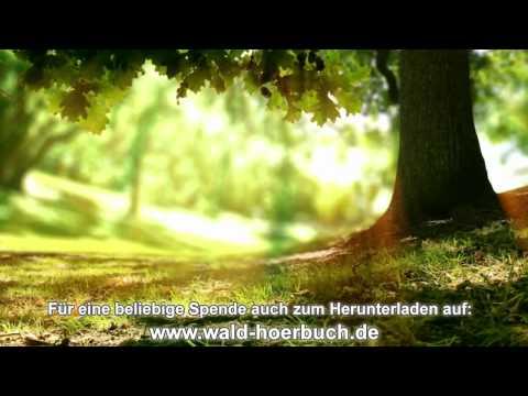 Wenn der Wald spricht - 2. Kapitel - Wachstum & Selbstfindung