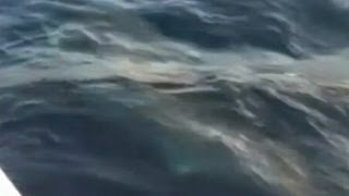 great-white-shark-caught-by-fisherman-video-caught-on-tape