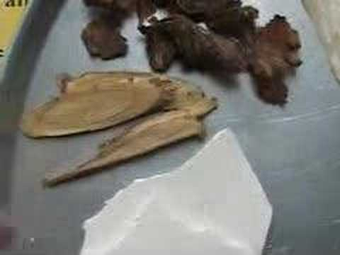 Delay Aging -- A Chinese Herbal Prescription (16)