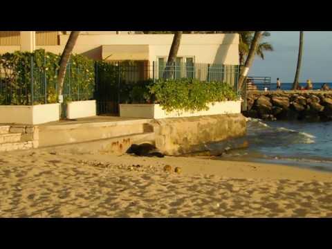 Baby Hawaiian Monk Seal 07052017