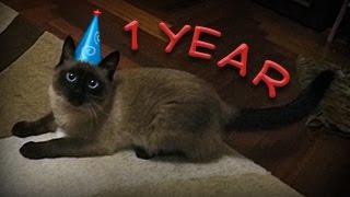 День Рождения Кокосика VLOG! Празднуем ДР кота, открываем подарки, задуваем свечу на торте