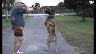 Omar Müller Trick Training Buck
