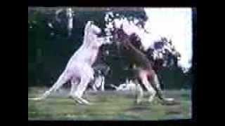 Životinjama sa (VIDEO) KADA