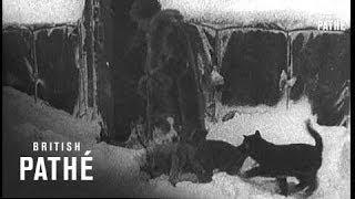Kiska And Attu In The Aleutians (1943)