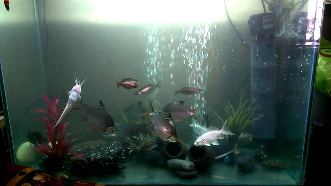 Fish aquarium in kurla - Fish Tank Thane Mumbai
