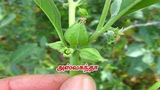 Siththarkal Ulagam