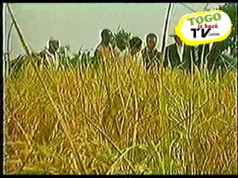 TOGO Programme de relance de l'agriculture au Togo