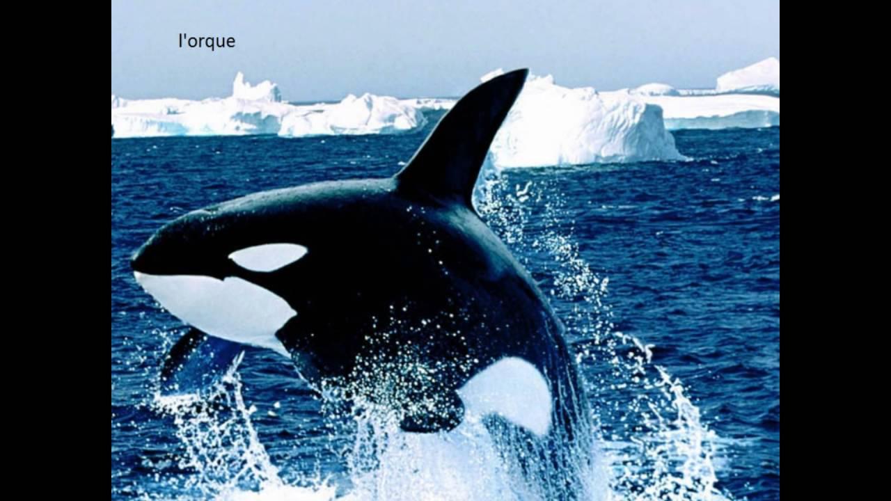 Connu Top 15 des animaux marins les plus dangereux du monde - YouTube IZ19