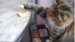 Чем кормить кошку
