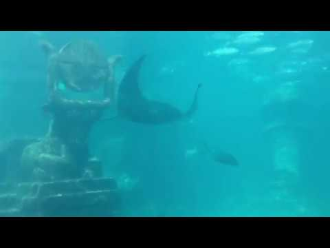Atlantis Resort and Aquarium in Nassau Bahamas