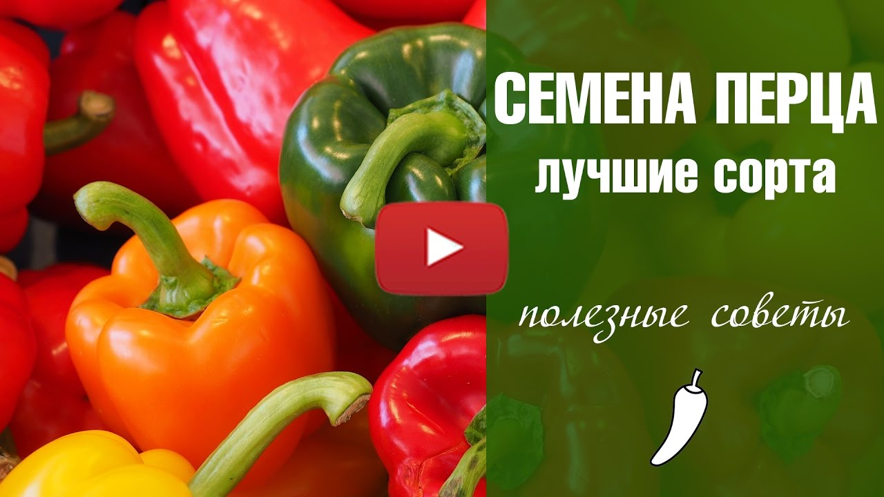 Семена перца  Паприка Лучшие сорта  02.01.2017