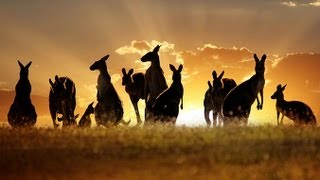 Tourism Destination: Australia(www.creativecreations.tv - High-end video productions in Australia - Travel / Event / Corporate / TV Commercials / Restaurants Video Productions - Tourism ..., 2013-09-12T02:05:56.000Z)