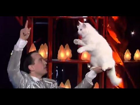 Amazing Cats Training ! Angorian Cats - The world greatest Cabaret
