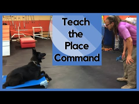 diy-do-it-yourself-place-command-2019-step-by-step-from-food-to-remote-collar