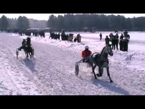 Верхняя Тура 8марта конно-спортивные состязания
