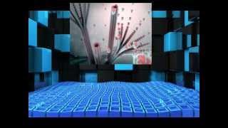 Bio Assignment - Centrioles, Cilia & Flagella