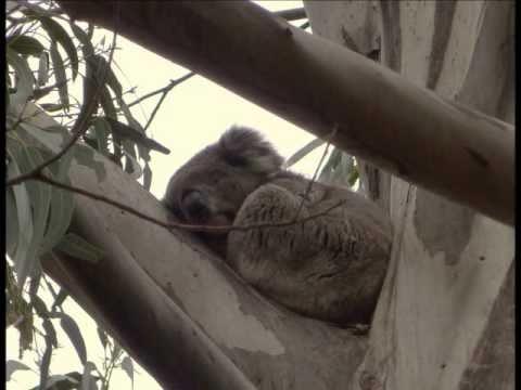 Romantic Australia 2 Kangaroo Island