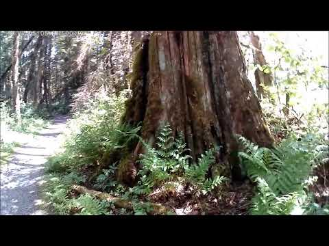 Kanaka Creek Regional Park, Maple Ridge, BC /part1